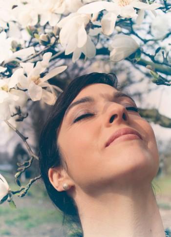 magnolie-gross
